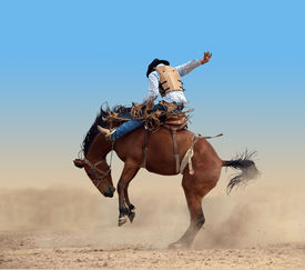 image of bucking bronco  - Bucking Rodeo Horse isolated with clipping path - JPG