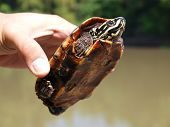 Turtle in the hand.