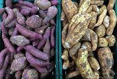 foto of cassava  - sweet potato and Cassava Roots at the market - JPG