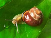 Snail On A Leaf