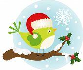Christmas bird on holly branch