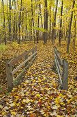 Wooden Bridge In The Forest.