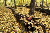 Forest Floor In Autumn.