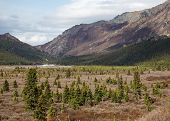 stock photo of denali national park  - Landscape view of Denali National Park in spring - JPG