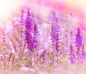 Purple flowers in meadow