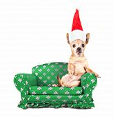 a chihuahua on a miniature couch on a white background with a santa hat on for christmas