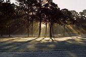 sunrays on golf course