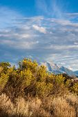 pic of sagebrush  - vertical view of Mount Sopris in distance and sagebrush in foreground, Colorado