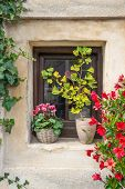 Flower-bedecked window