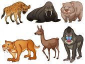 picture of sabertooth  - Six different kind of rare animals - JPG