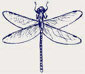 picture of dragonflies  - Dragonfly sketch - JPG