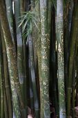 image of initials  - Initials carved in trunks of bamboo trees - JPG