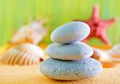 picture of echinoderms  - sea shells and stones on the yellow sand - JPG