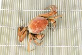 pic of cooked crab  - Cooked crab - JPG