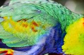 picture of parrots  - Parrot Tropical Bird with a Colroed Father - JPG