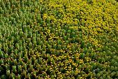 The Beautiful Cactus Field.