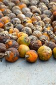 foto of ground nut  - A lot of betel nut on cement ground - JPG