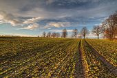 image of plowed field  - Field with young green grass in spring time before plowing with blue sky - JPG