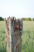 Weathered Fence Post poster