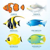 Tropical reef fish collection - detailed vector illustration of Clownfish, Triggerfish, Moorish Idol, Neon Damselfish, Butterflyfish and Angelfish