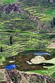 Terraced field, Colca Canyon, Peru
