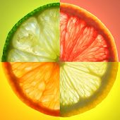 stock photo of tangelo  - Composite of four different citrus fruits photos on matching backgroundslit from behind - JPG