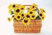 Sun Flowers In Basket