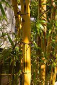 Bamboo Stump