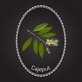 Cajeput Melaleuca Leucadendron , Or Weeping Paperbark, Medicinal Plant. Hand Drawn Botanical Vector  poster