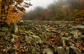 Foggy Autumn On Devil's Racecourse