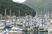 pic of sail-boats  - A view of the boats moored and in slips in Whittier Alaska - JPG