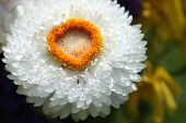 White And Gold Flower