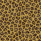 fur texture - seamless