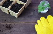 Plant Seed Growing Concept, Farmer Hand Giving Fertilizer To Young Plant. Tools And Gloves For Plant poster