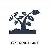 Growing Plant Icon Isolated On White Background. Growing Plant Icon Simple Sign. Growing Plant Icon  poster