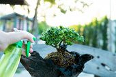 Bonsai Care And Tending Houseplant Growth. Watering Small Tree. Tree Treatment Concepts. poster