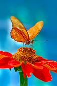 stock photo of blue butterfly  - Orange butterfly and flower on blue background - JPG