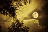 Attractive Bright Full Moon On Colorful Sky Above Silhouettes Of Trees, Outdoors At Nighttime. Seren poster