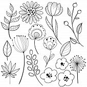 Flower Graphic Design. Black And White Vector Set Of Floral Elements With Hand Drawn Flowers. Collec poster