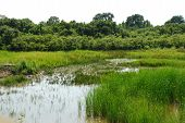 Isonzo Wetland-Naturschutzgebiet