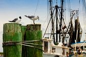 Seagulls At A Fishing Pier