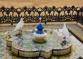Bathing doves, Seville, Andalucia, Spain
