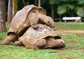 two turtles sympathizing each other