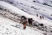 Climbers Crossing Snowfield
