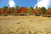 picture of sakhalin  - Autumn landscape - a bright wood in mountain on breakaway. Island Sakhalin.   ** Note: Slight blurriness, best at smaller sizes - JPG