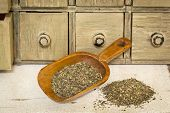 peppermint herbal tea - a pile and rustic wooden scoop with a primitive apothecary drawer cabinet in background