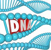 A strand of DNA with the letters or word within it to illustrate genetics, heredity and medical rese