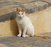 Stray Greek Cat