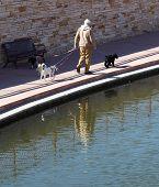 Elderly Man Walking Dogs
