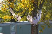stock photo of funeral home  - Scary ghosts for Halloween decorations - JPG